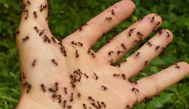 ants-4239_640